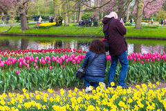 Tourists enjoy taking pictures of tulips at Keukenhof garden par Stock Photos