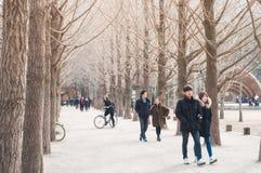 Tourists enjoy tree-lined trails of Nami Island (Namiseom) Stock Images