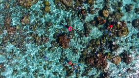 Tourists enjoying swimming in perfect clear turquoise coral reef Pacific ocean water in amazing top 4k aerial drone view stock video footage