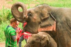 Tourists feed Elephants Stock Photos