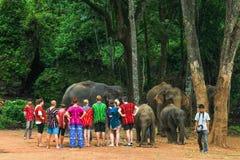 Tourists feed Elephants Royalty Free Stock Photos