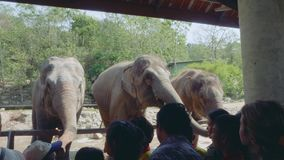 Tourists feed gigantic elephants in zoo in Thailand