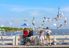 Tourists feeding birds at Bang Pu seaside. Stock Images