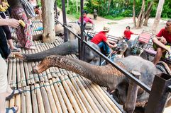 Tourists feeding the elephants with bananas before start the tours Royalty Free Stock Photography