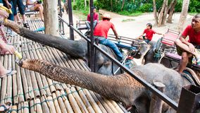 Tourists feeding the elephants with bananas before start the tours Stock Image