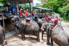 Tourists feeding the elephants with bananas before start the tours Royalty Free Stock Photo