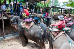 Tourists feeding the elephants with bananas before start the tours Stock Images