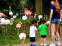 Tourists feeding flamingos Stock Image
