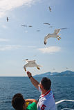 Tourists feeding gulls  Stock Image