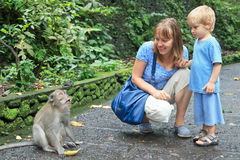 Tourists feeding monkey Stock Photos