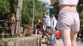 Tourists Feeding Wild Monkeys and Taking Photos in Tropical Jungle Park. Phuket Town Monkey Hill. Phuket, Thailand - 08. DEC 2017 stock video
