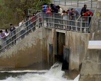 Tourists Capture Photographs at Fish Ladder - Gana Stock Photo