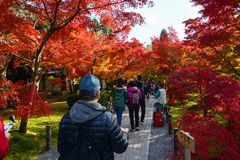 Tourists flock to Eikando Temple in Kyoto for the annual autumn display of seasonal foliage. Kyoto, Japan - November 16, 2016 - Carefully manicured grounds at Royalty Free Stock Image