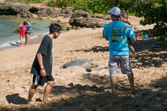 Tourists Flood Haleiwa Beach Park in Oahu Hawaii. HALEIWA, OAHU, HAWAII - FEBRUARY 15, 2017: Tourists fill the beach and take pictures and selfies with Royalty Free Stock Photos