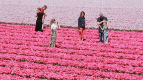Tourists in a flower field in Holland stock footage