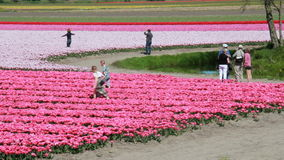 Tourists in a flower field in Holland stock video