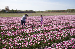Tourists in flowerfield Stock Photos