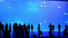 Tourists in front of the world`s largest aquarium. Zhuhai, China: September 23, 2018: Tourists in front of the world`s largest aquarium at Chimelong Ocean stock video