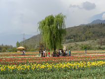 Tourists at garden in Kashmir. Its photo of garden. Place - Kashmir in India royalty free stock photos