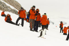 Tourists and gentoo penguin stock photography
