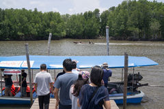 Tourists getting on the boat in the river. Chantaburi, Thailand - April 18, 2015: Unidentified tourists get on the boat in the river with green mangrove forest Royalty Free Stock Photo