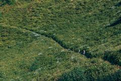 Tourists Going Across The flourishing Meadow. Tourists Going to The Mountains Across the flourishing Field Stock Image