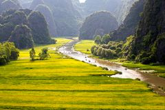 Tourists going on boats along a stream with ripen rice fields on both sides. TAM COC, NINH BINH, VIETNAM - MAY 14, 2017: travellers going on boats along a royalty free stock photos