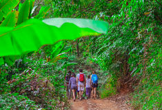 Tourists hiking in the deep jungle of the Khao Yai national park in Thailand Royalty Free Stock Photography