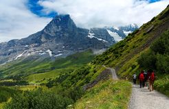 Tourists hiking on a trail by the grassy mountainside from Mannlichen to Kleine Scheidegg. With the majestic North Face of Mountain Eiger in background, in royalty free stock photos