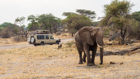 Tourists In Safari Jeep Watching Elephant Royalty Free Stock Image