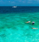 Tourists involved in snorkeling in shallow water near tropical i Stock Images