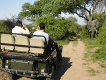 Tourists In Jeep Looking At Elephant Stock Image