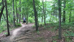 Tourists at the Lake Norman State Park. Tourists walking at the Lake Norman State Park in Iredell County, North Carolina in the United States stock video