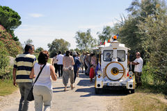 Tourists leave after their visit to the Camargue horses Royalty Free Stock Photo