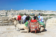 Tourists looking at Dome of the Rock in Jerusalem. With camel lying gracefully on the foreground royalty free stock photos