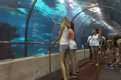 Tourists looking at fishes at the aquarium Royalty Free Stock Photography