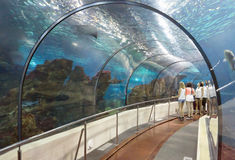 Tourists looking at fishes at the aquarium Stock Image