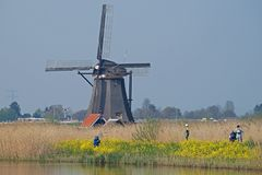 Tourists making photos of the windmills in Kinderdijk standing in yellow coleseed. Tourists making photos of the famous windmills in Kinderdijk standing in royalty free stock image