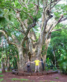 Tourists near a large baobab. Mauritius. Stock Photography