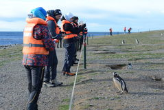 Tourists observe Magellanic penguins on Magdalena island in the Strait of Magellan near Punta Arenas. Stock Photo