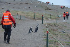 Tourists observe Magellanic penguins on Magdalena island in the Strait of Magellan near Punta Arenas. Stock Images