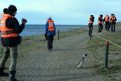 Tourists observe Magellanic penguins on Magdalena island in the Strait of Magellan near Punta Arenas. Stock Photography