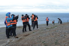 Tourists observe Magellanic penguins on Magdalena island in the Strait of Magellan near Punta Arenas. Royalty Free Stock Photography