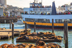 Tourists observe Sea Lions Stock Photography