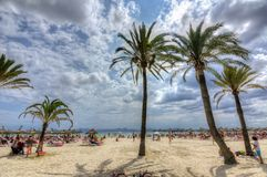 Tourists and palms on Alcudia beach, Mallorca, Spain Stock Photography