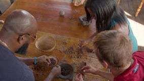 Tourists Peeling Roasted Cocoa Beans In Ecuador. To Pview stock footage
