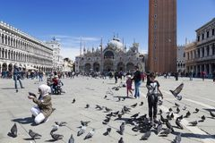 Tourists and pigeons in Piazza San Marco in Venice royalty free stock photography