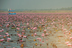 Tourists on Pink water lily in lake,Thailand. Stock Image