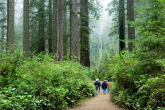 Tourists in Redwoods stock photo