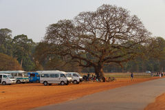 Tourists rest under a large tree Royalty Free Stock Photography